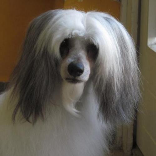 Kutyakozmetika (archívum 2017 előtt)